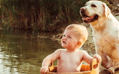 La Higiene Dental en los Perros